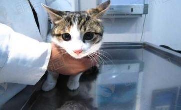 猫咪在宠物店寄养一天要多少钱?
